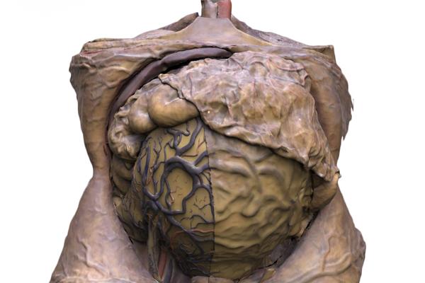 Esculturas anatómicas en cera